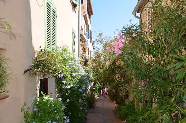 Safranier in the old city of Antibes