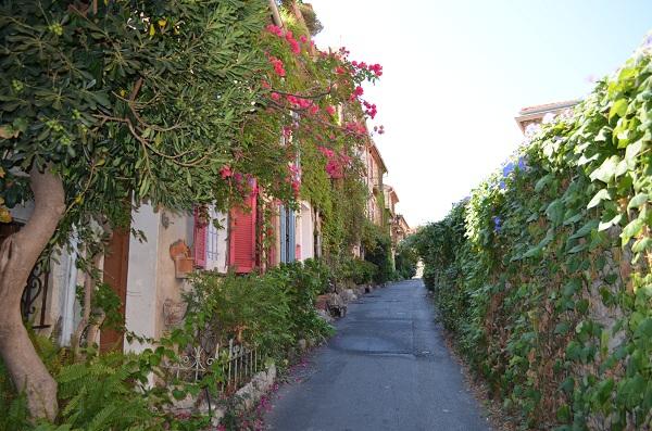 Le Safranier en fleur depuis le bas de la rue du Haut Safranier